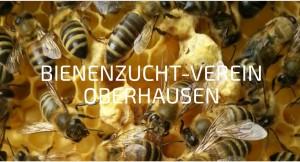 Imker Verein Bienenzucht-Verein Oberhausen Heinz Depping