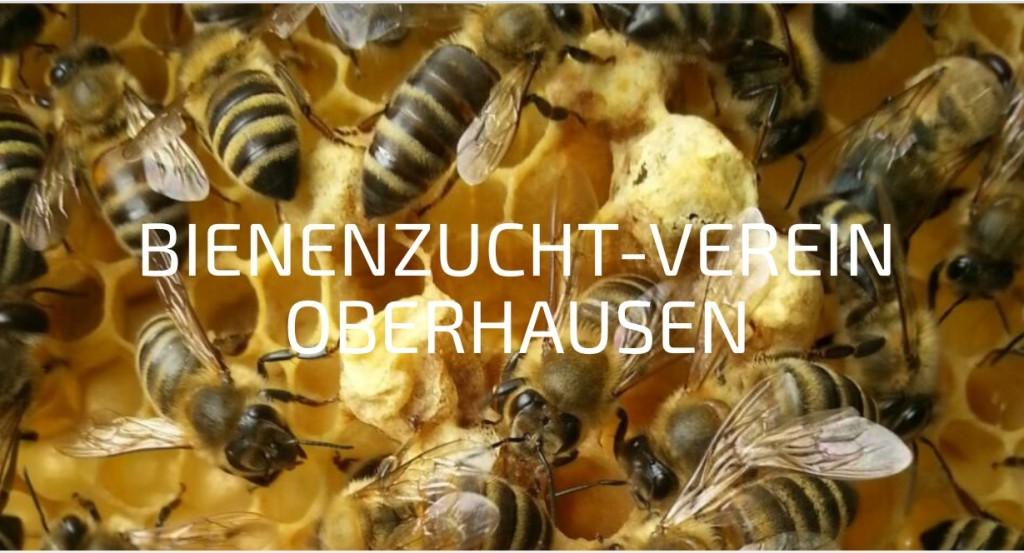 Verein Imker Oberhausen Bienen