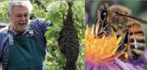 Lehrbienenstand Bienenvolk