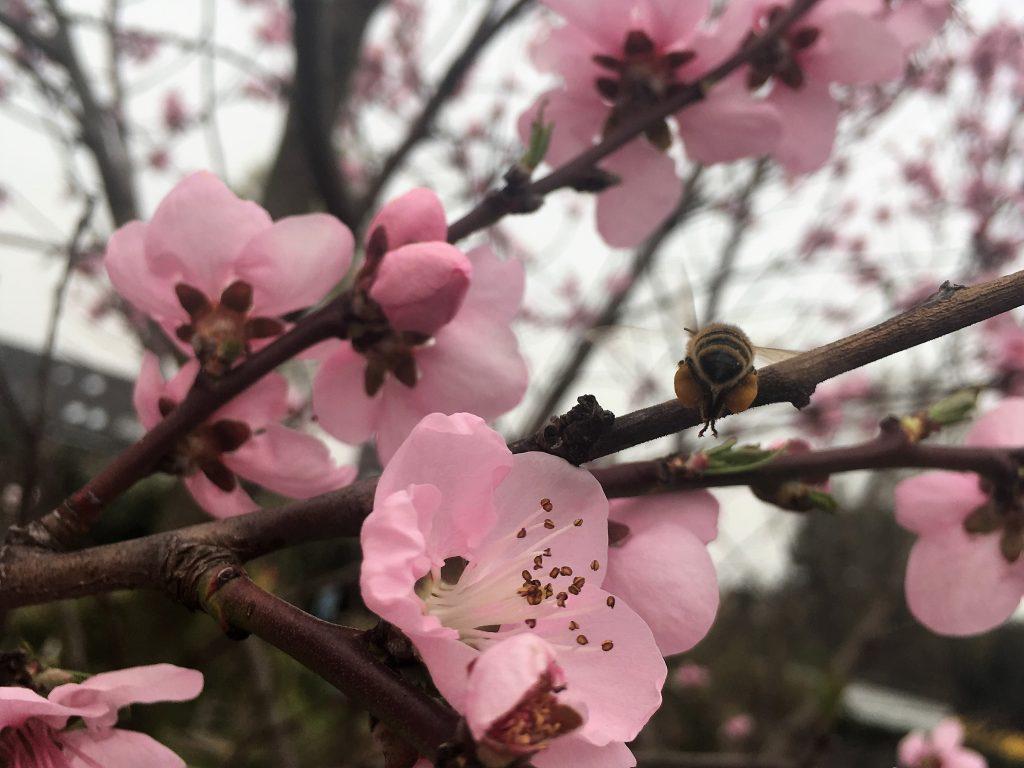 Bienen Imker Oberhausen