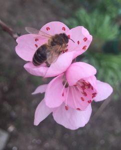 Bienen Imker Oberhausen2